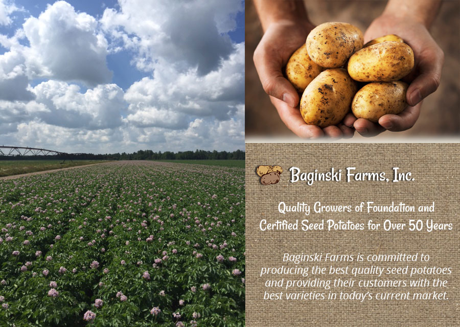seed potatoes certified seed potatoes  Wisconsin Langlade County