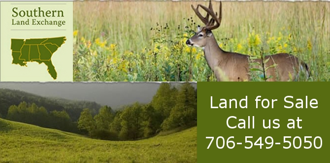forest land timber land for sale  Franklin County Georgia