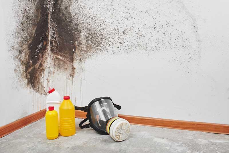 mold removal contractors professional mold abatement contractors  Kentucky Boone County