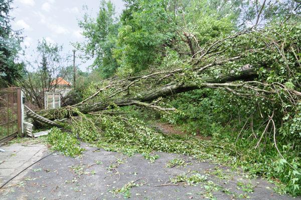 wind damage restoration