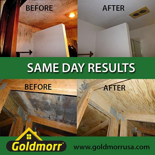 mold removal company  The Woodlands Texas Montgomery County