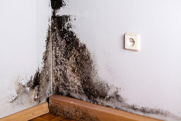 mold removal mold mitigation  Ohio Montgomery County