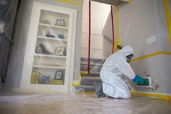 Professional Mold Remediation Contractors in Door County