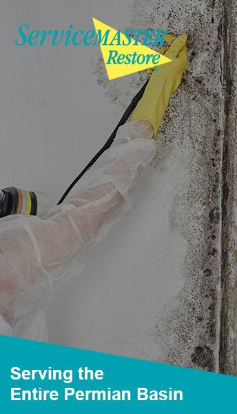 mold removal company mold abatement company  Texas Glasscock County